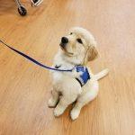 Dog in Training, Austin, as a puppy
