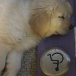 Puppy Bonnie sleeping