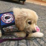 Puppy Bonnie