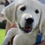 Puppy Breeze
