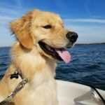 Service Dog In Training Austin on a boat